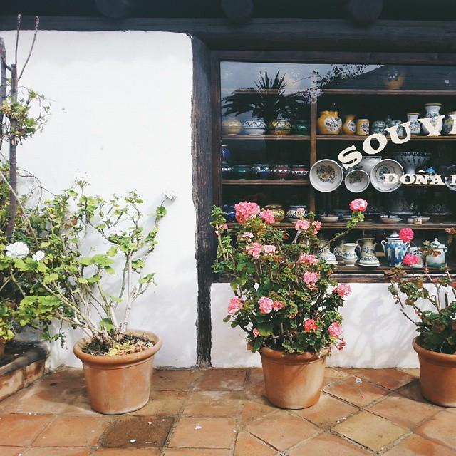 Littlegreenshedblog.co.uk, fuerteventura, first choice holidays