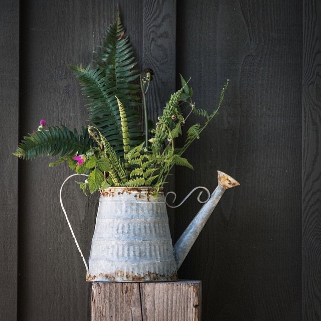 littlegreenshed blog - nature in the home