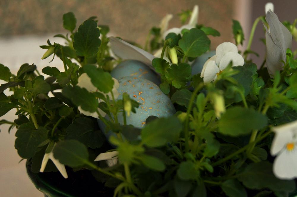 easter egg, naturally dyed, littlegreenshed blog