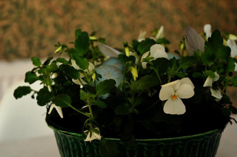 viola nest dark 2 1000