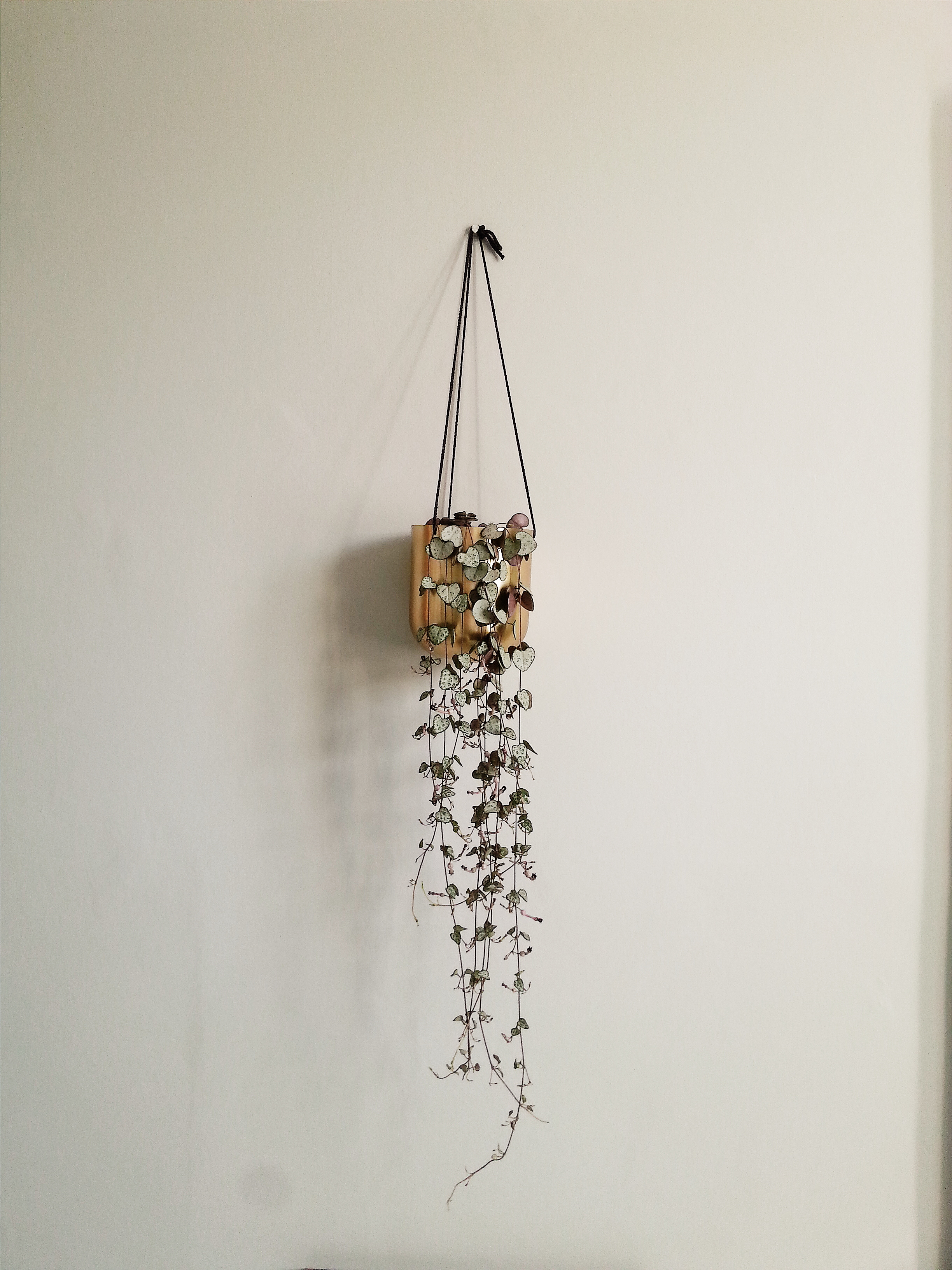 Out There Interiors Brass Hanging Planter
