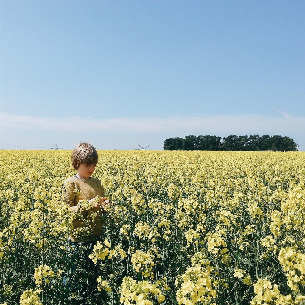 Yellow Fields Littlegreenshed blog