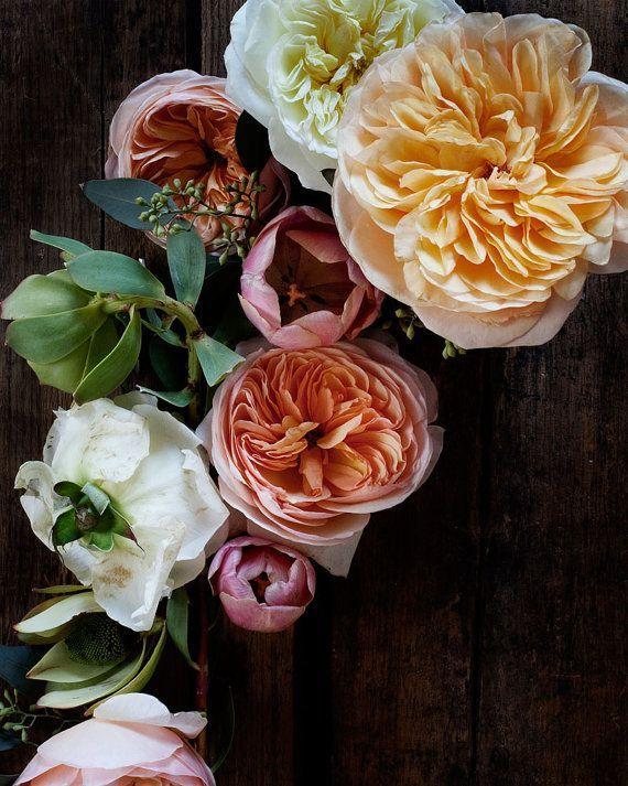 Roses - garden, scented, climbing - littlegreenshed