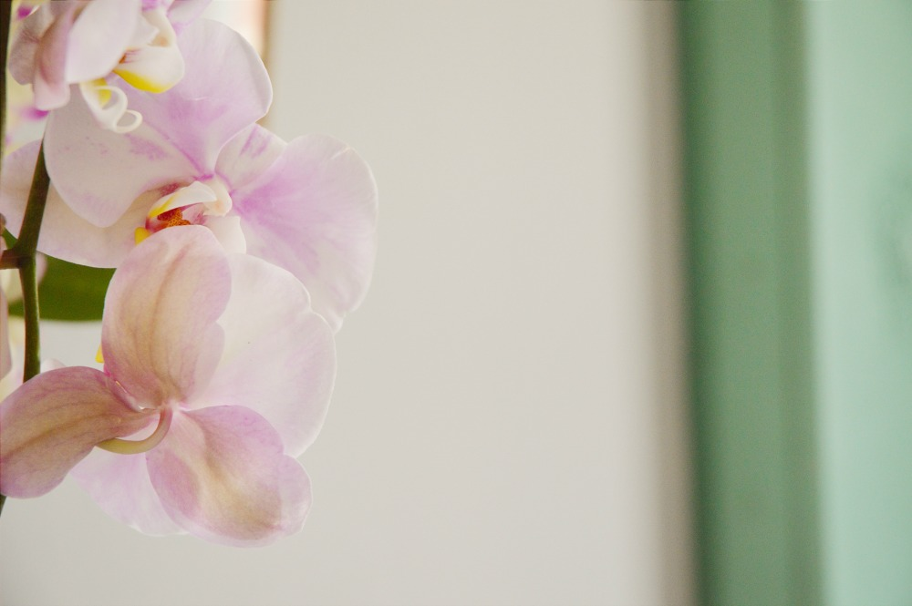 Styling with Orchids - Littlegreenshed blog