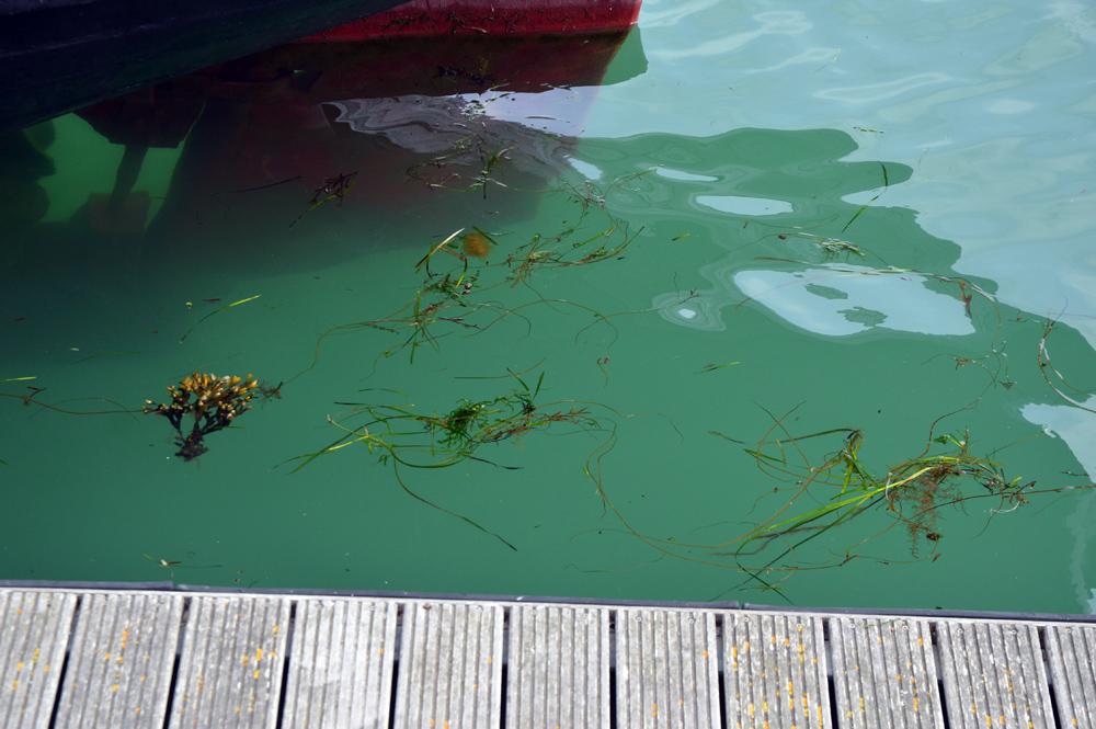 Dorset-harbour-water