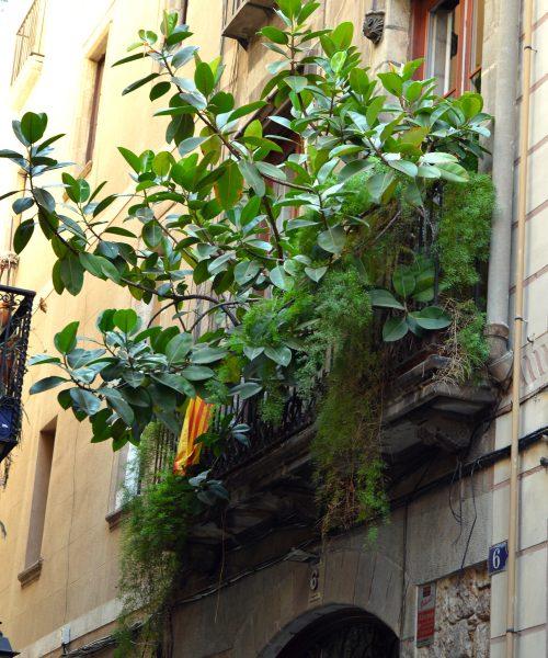 barcelona streets 9 - littlegreenshed blog