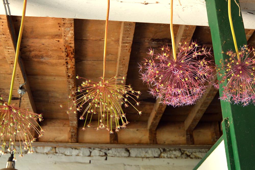 bayntun flowers - littlegreenshed blog 6