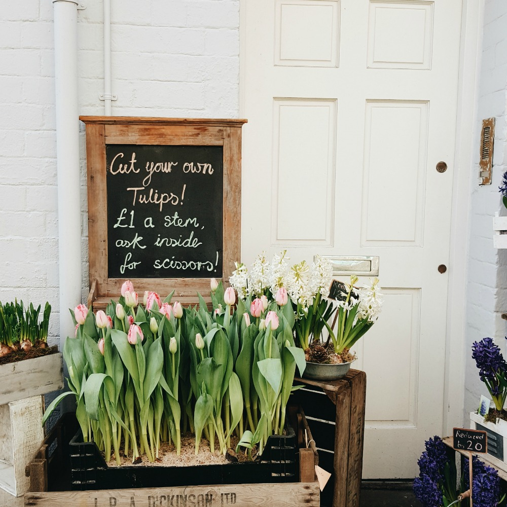 Lou Archell Littlegreenshed Tulips