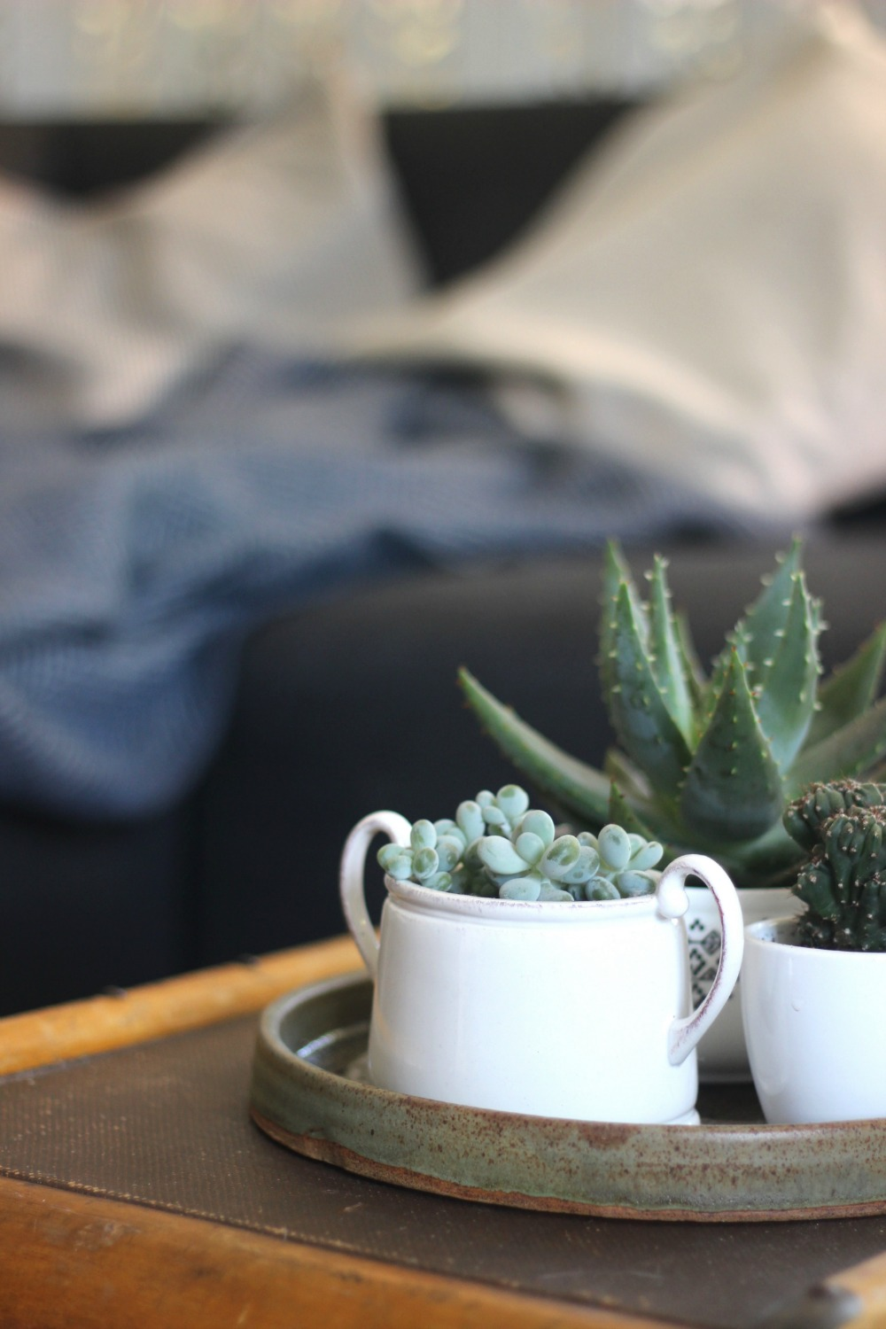 succulents pots coffee table