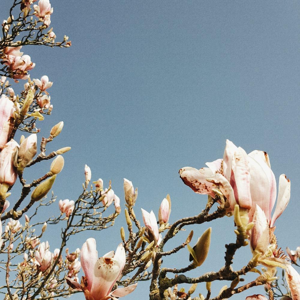 Littlegreenshed blog weekend in the sun