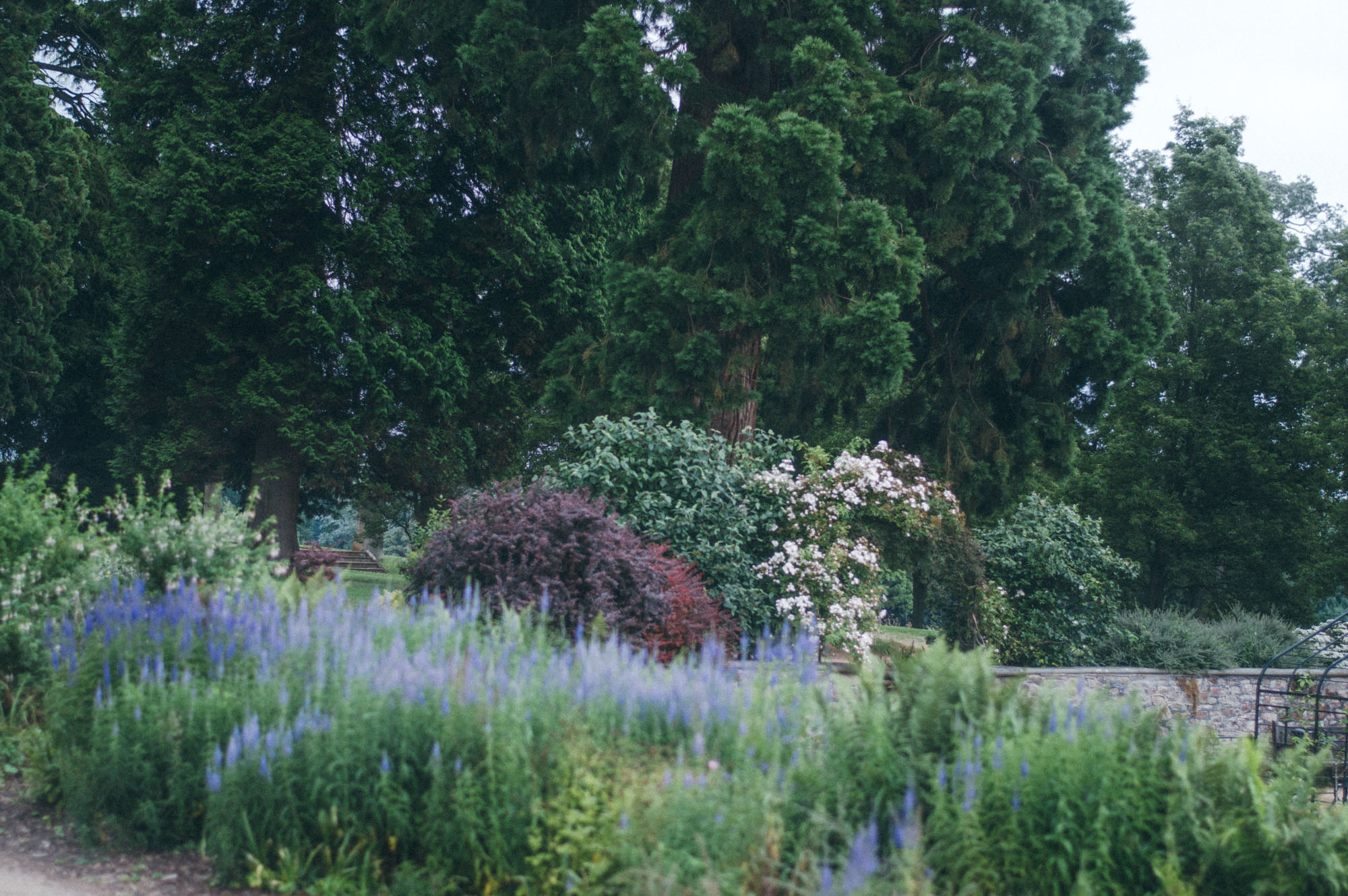 Lou Archell July front garden 2016-8