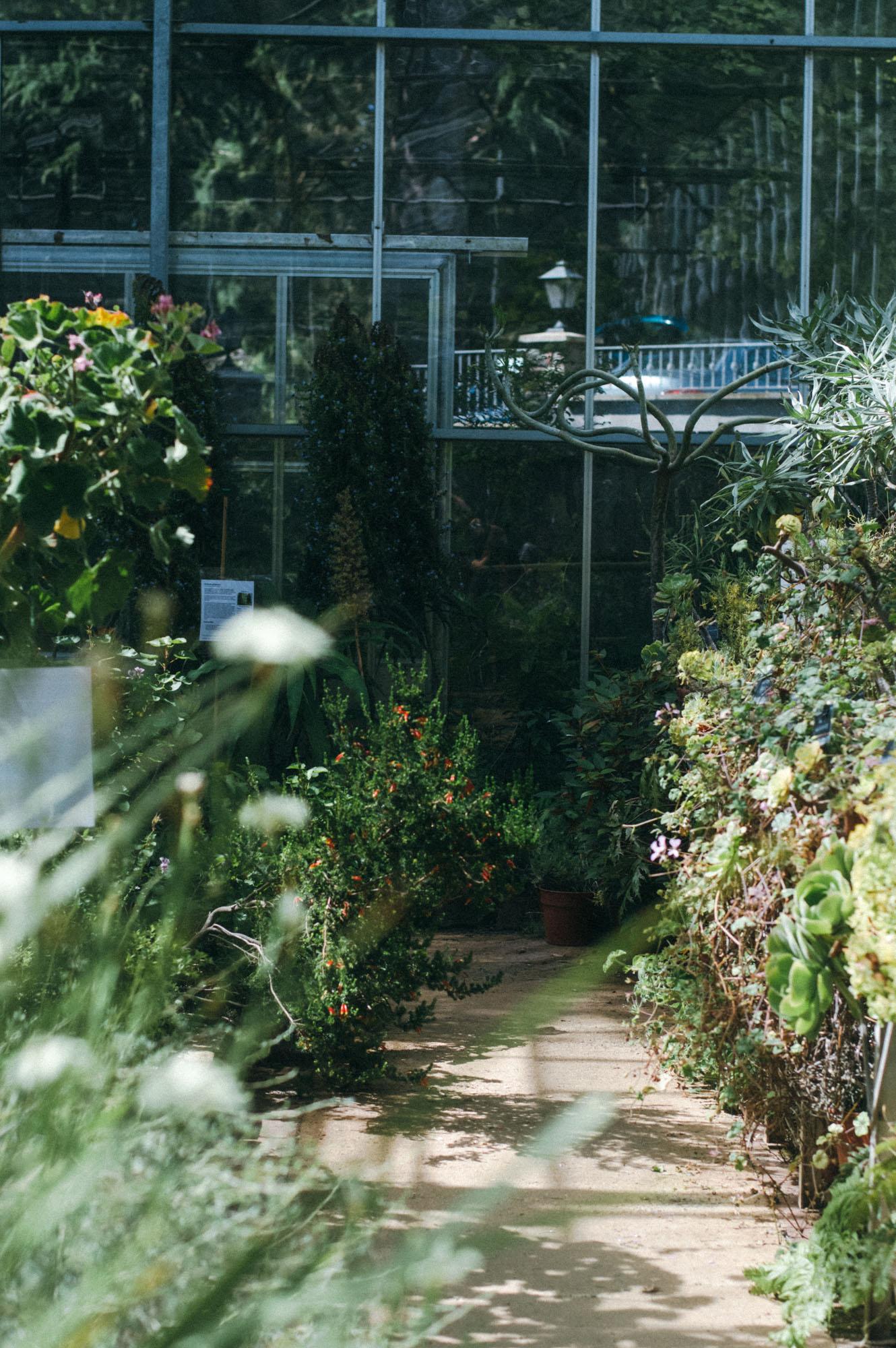 Lou Archell Bristol Botanical Gardens August 2016-13