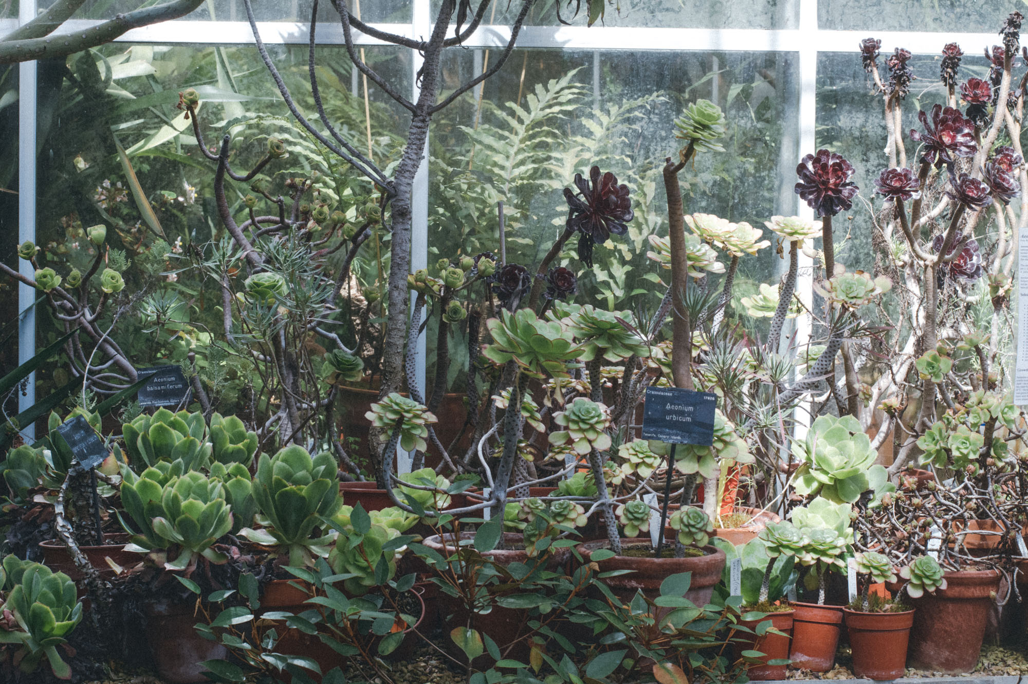 Lou Archell Bristol Botanical Gardens August 2016-2