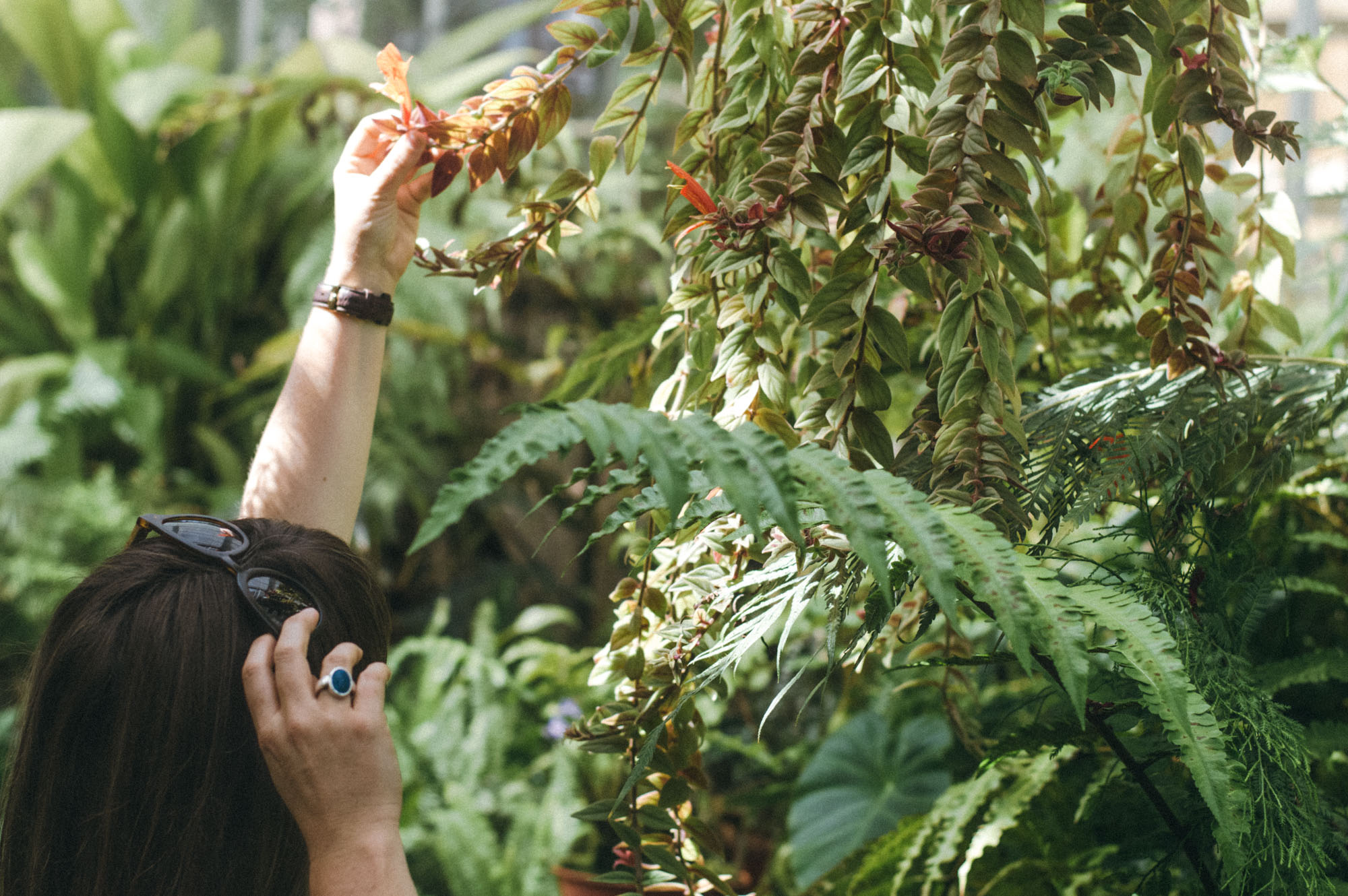 Lou Archell Bristol Botanical Gardens August 2016-22