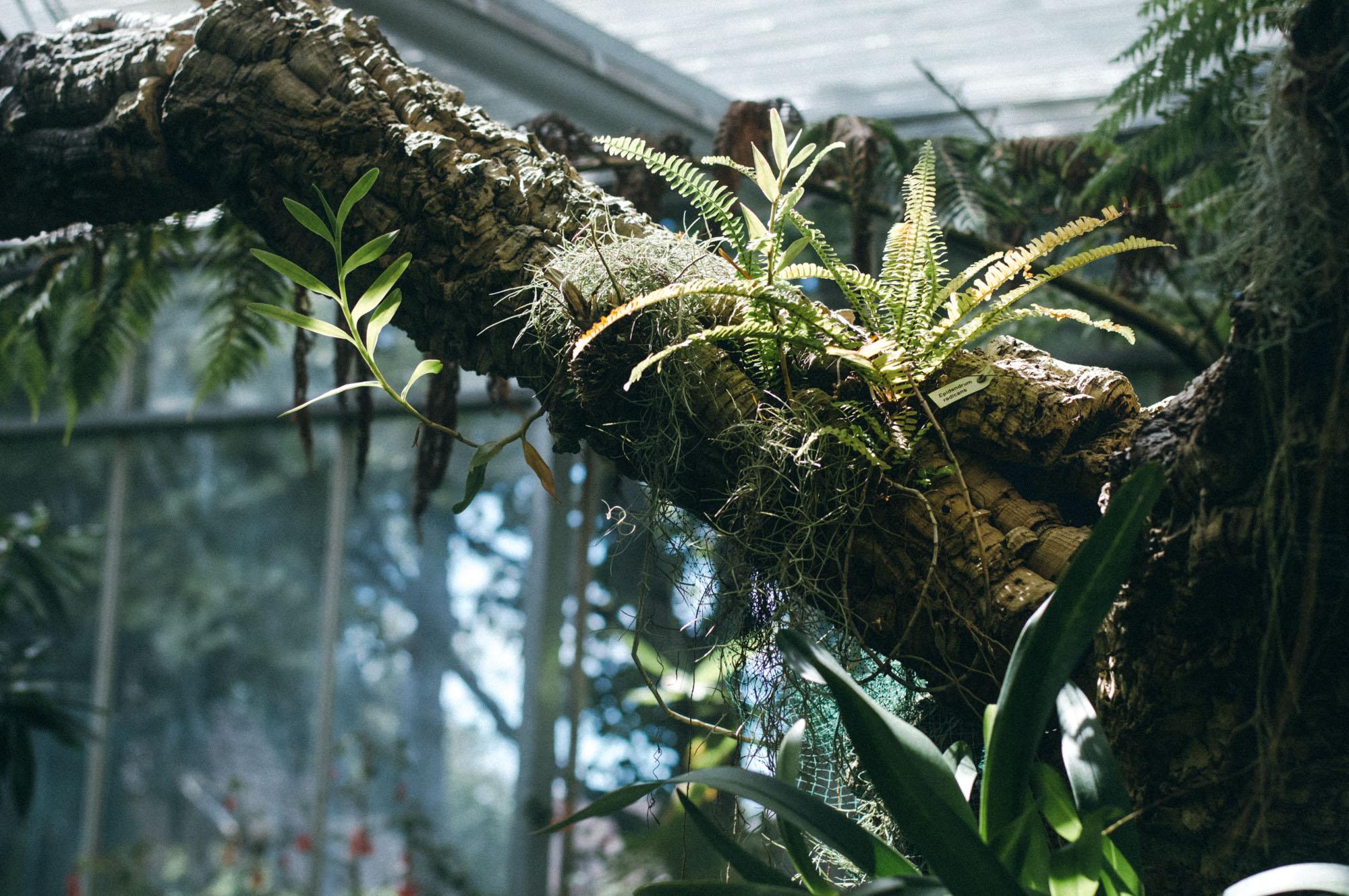 Lou Archell Bristol Botanical Gardens August 2016-23