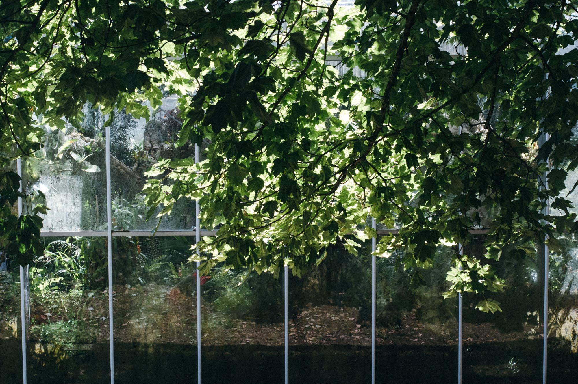 Lou Archell Bristol Botanical Gardens August 2016