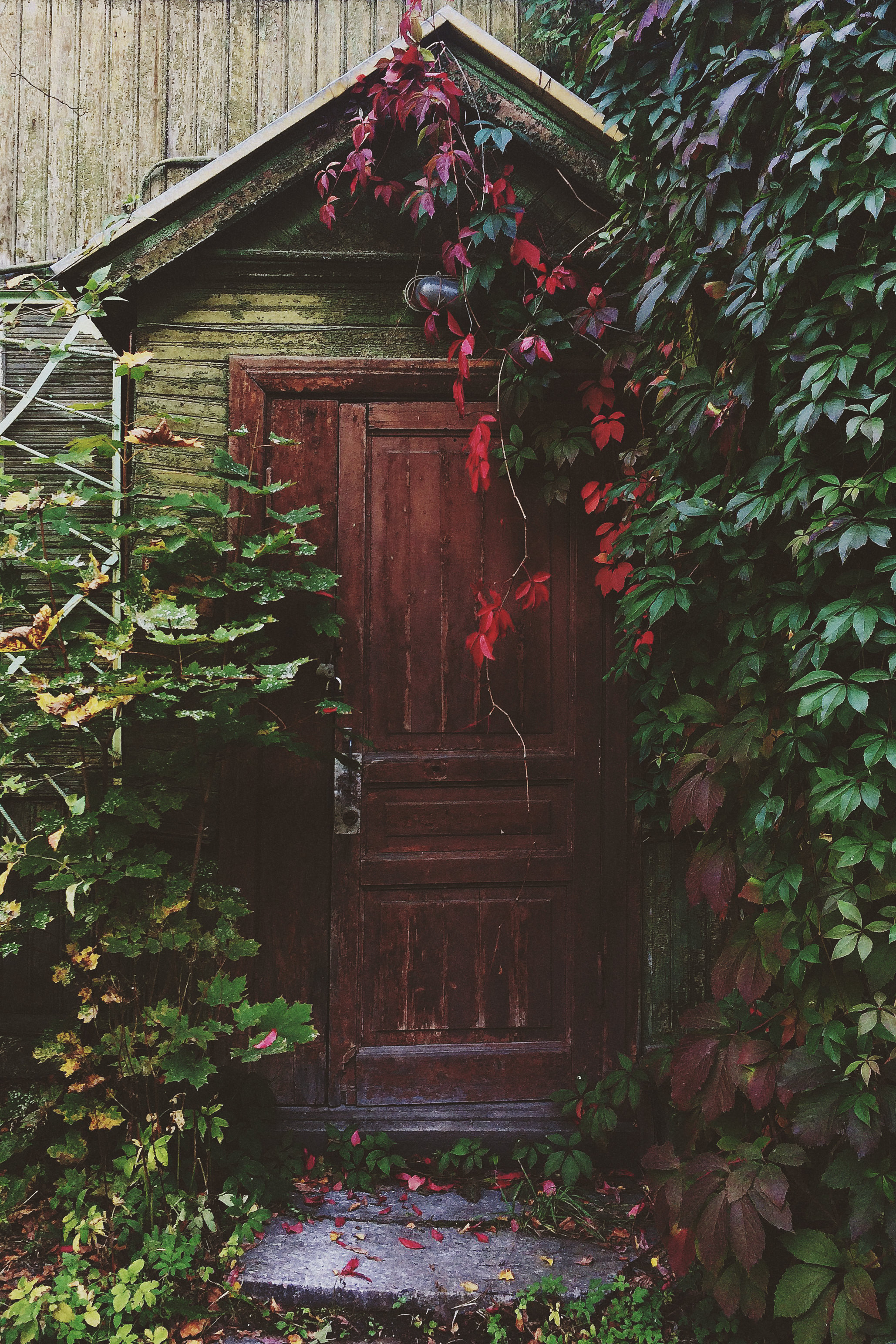 unsplash shed door