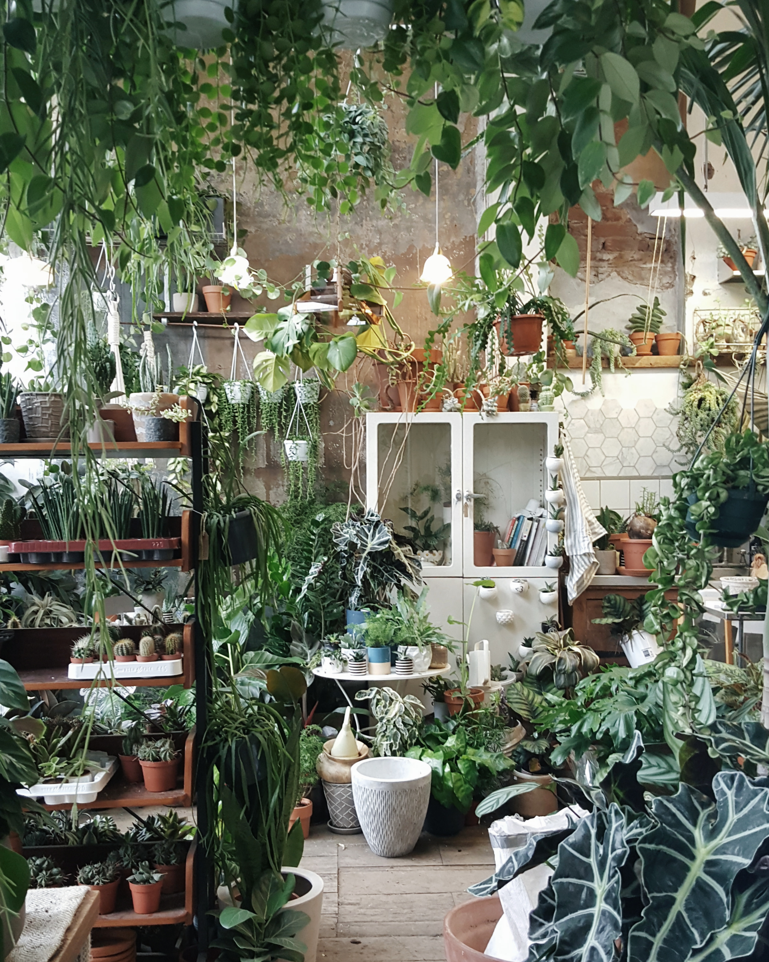Littlegreenshed blog nature in the home conservatory archives London