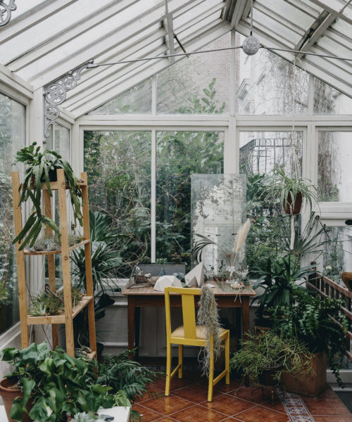 Littlegreenshed Blog House of PLants book review