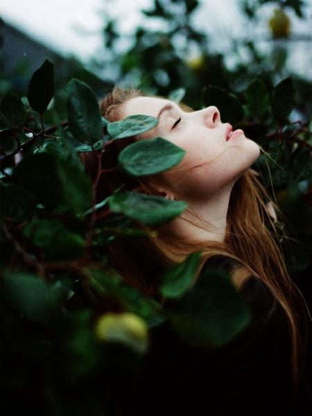 hedge witch littlegreenshed blog